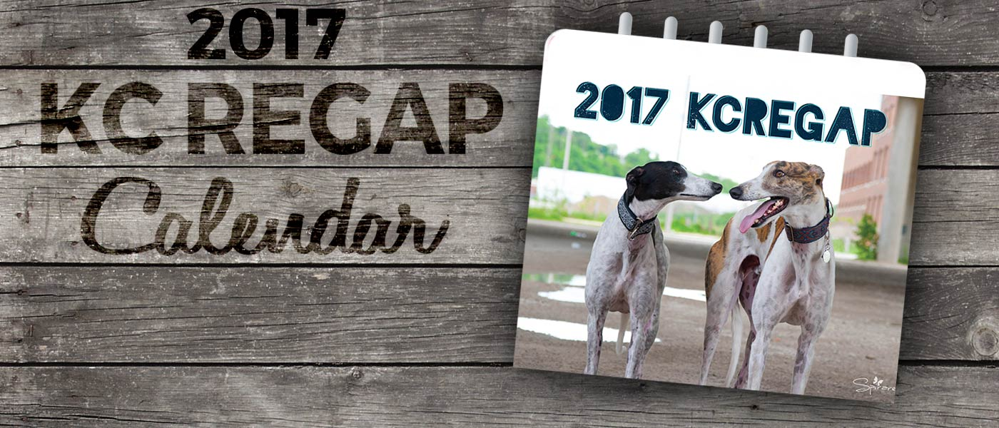 2017 calendar REGAP fundraiser greyhounds for adoption